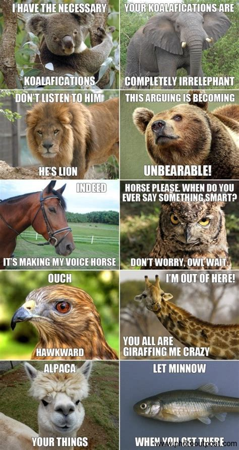Animal Pun Memes - funny animals funny jokes funny pics funny pictures funny