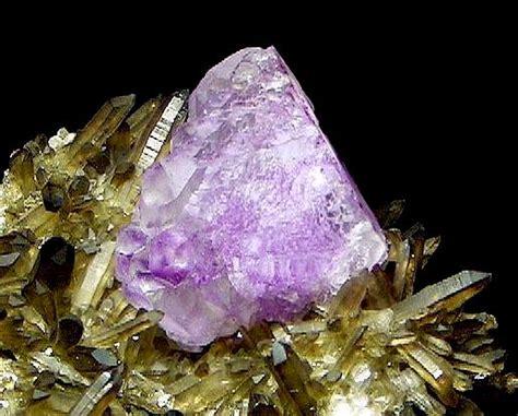 lavender baturaja superb quality halloffame3