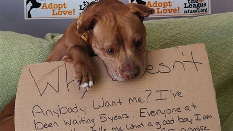 viral photo gets new york shelter chester adopted