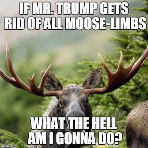 Moose Meme - image gallery moose puns