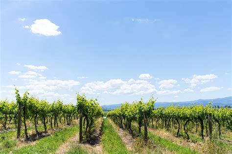 hot balloon flight  wine   yarra valley