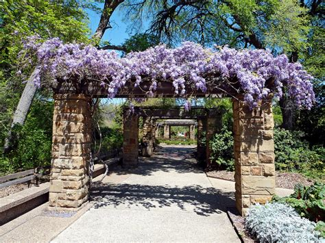 wisteria covered pergola fort worth botanical garden flickr