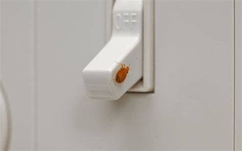 orkin bed bug reviews orkin bed bug reviews 28 images orkin bed bug reviews