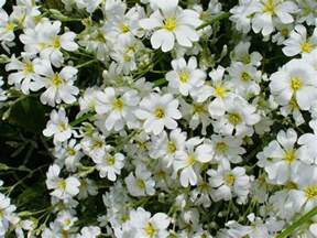 flowers for flower lovers beautiful white flowers wallpapers