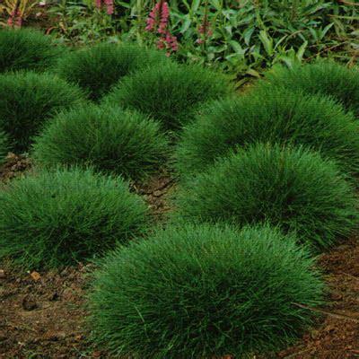 giardino in ombra soluzioni alternative al manto erboso nel prato in ombra