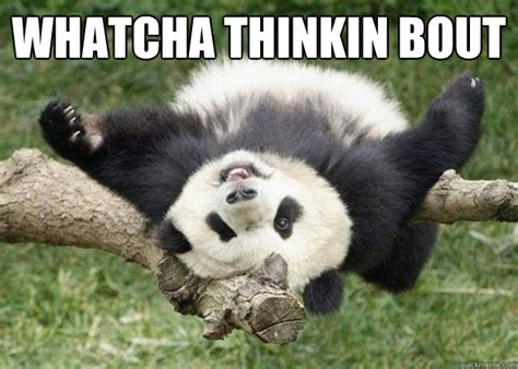 Whatcha Thinkin About Meme - whatcha thinkin bout pandameme quickmeme