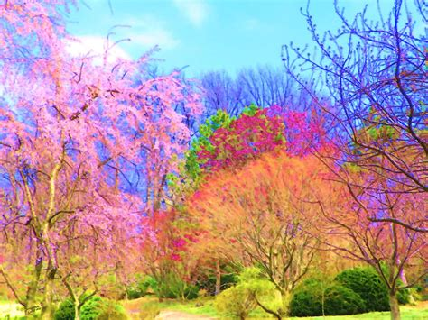 colorful trees trees with color by susanna katherine