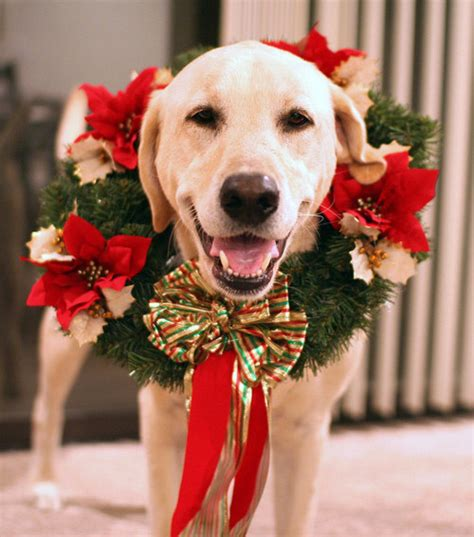 dog wreath pictures   images  facebook