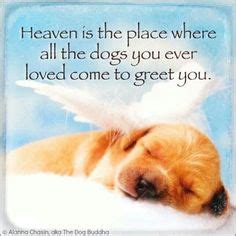 all dogs go to heaven quotes all dogs go to heaven on heavens dogs and rescue dogs