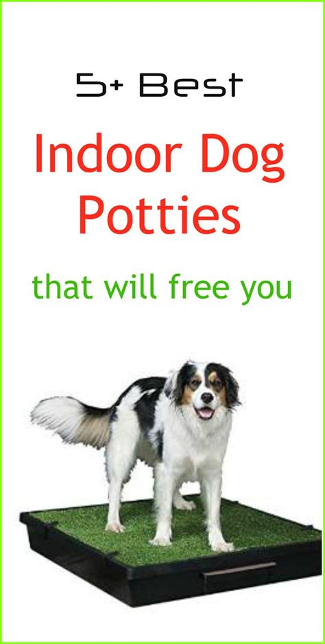 dog potties in house best 25 dog pee pads ideas on pinterest indoor potty