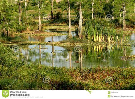 eagle lake everglades habitat naples fl stock photo