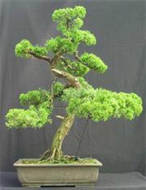 create your own bonsai step by step create your own bonsai step by step september 1996 edition open library