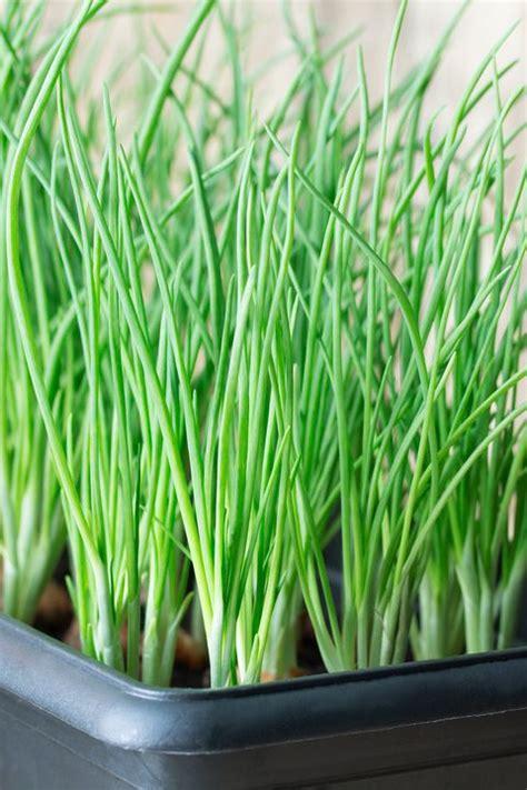vegetales  cultivar en el interior