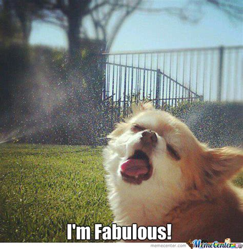Im Fab Meme - i m fabulous by hazzydog meme center