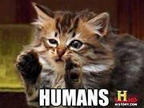 Cat Alien Meme - memes del gato que cay 243 sobre joven en sala de cine