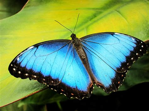 new butterfly new butterfly photo gallery san vito bird club