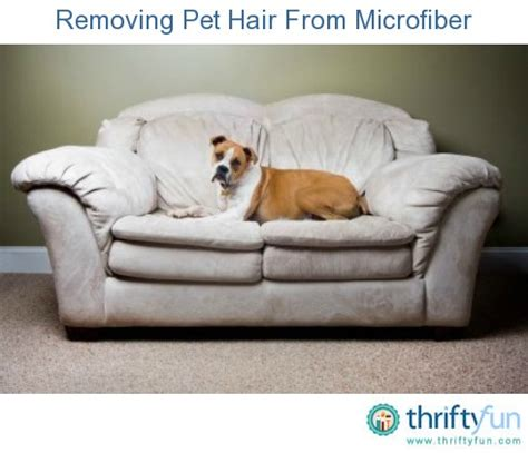 how to remove pet odor from microfiber couch best sofa material for dog hair okaycreations net
