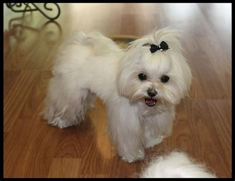 dog cut styles dogs new hair cuts jett callie s new cuts for the