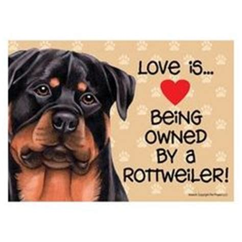 imagenes chistosas taring rottweiler dog photo cute rottweiler puppy face image