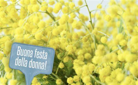 immagine di mimosa fiore significato dei fiori la mimosa ecco perch 233 si regala l