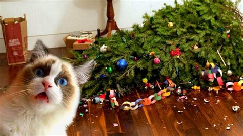 funny cats in christmas trees cats trees compilation new