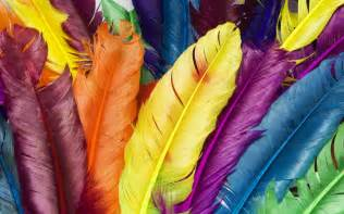 colored feathers feathers in colors wallpapers hd wallpapers