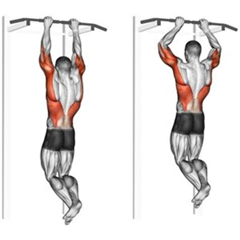dorsali a casa esercizi per dorsali muscoli info