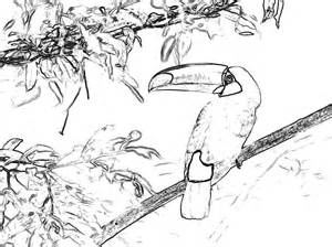 toucan coloring page toucan coloring page of with large beak