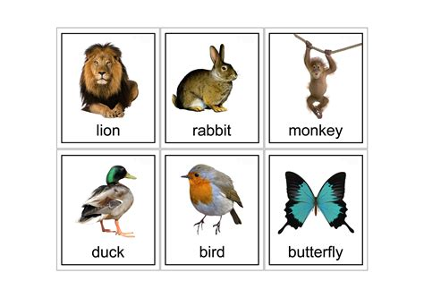 printable flash cards of animals printable animal flashcards sensory star store
