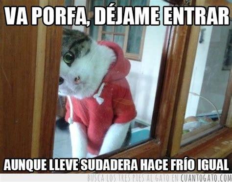 imágenes chistosas jajaja jajaja chistes de gatos graciosos gatos graciosos