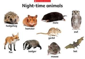 activities for kids on nocturnal animals animals ebook