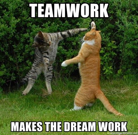 Working Cat Meme - teamwork makes the dreamwork meme teamwork quotes youtube