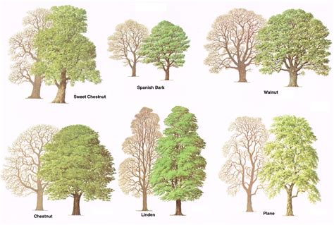 types of trees types of trees medway valley line