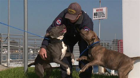 dog on boat to europe san diego lifeguards save dogs from abandoned boat