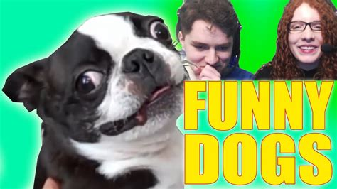 try not to laugh dogs try not to laugh dogs compilation challenge pet buzz