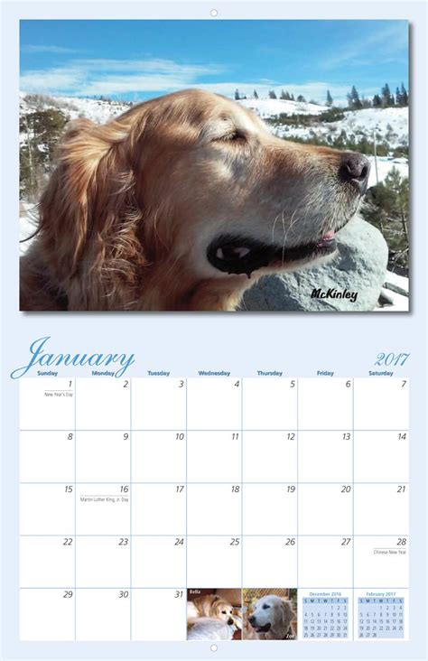 rescue golden retrievers northern california golden retriever rescue calendar yearbox calendars