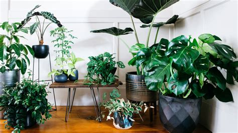 designing  potted plants sunset magazine