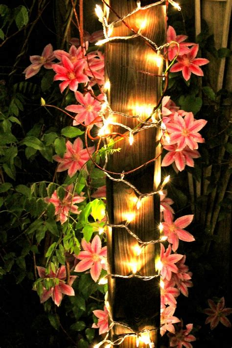 how to put a timer on a light switch 10 best images about trailing clematis vines on