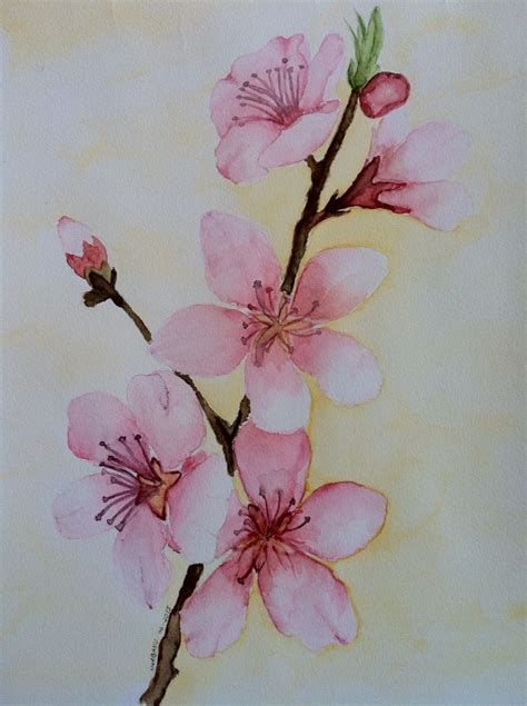 cherry blossom watercolor tattoo cherry blossom watercolor my paintings