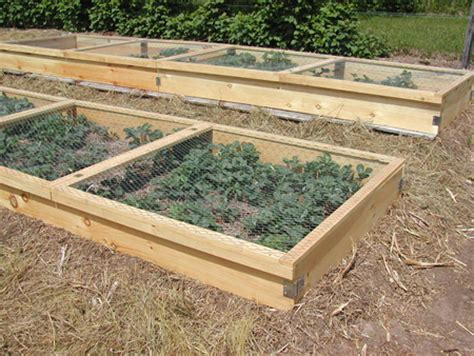 Strawberry Planter Boxes by Building Planter Boxes For Strawberries Countryside Network