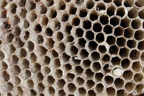 visitor pattern c black wasp gratis stock foto s rgbstock gratis afbeeldingen
