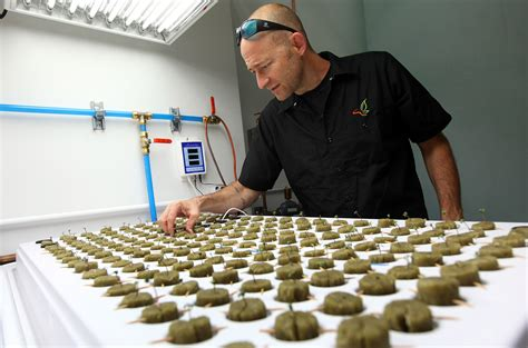 South Dakota Background Check South Dakota Marijuana Resort Aims For New Year S Opening Marijuana