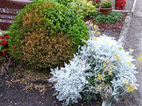 Pilze Im Garten Schlimm by Buchsbaum Triebsterben 171 Wir Sind Im Garten