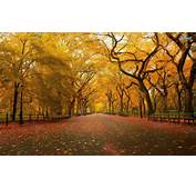 Central Park Wallpapers  Wallpaper Gallery