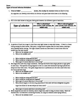 Darwin S Selection Worksheet by Selection Worksheet Worksheets Releaseboard Free Printable Worksheets And Activities