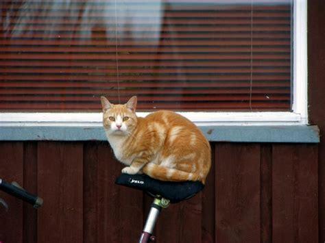 webshots cats 13 biker cats catster