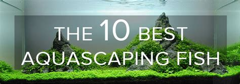 the best aquascape the 10 best aquascaping fish aquarium info