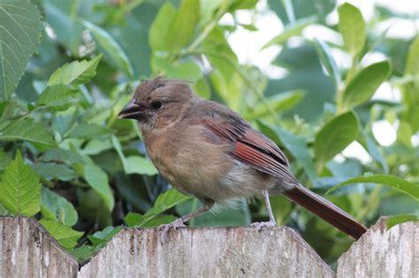 feeding finches backyard 5 best feeds for your bird feeder sweeney feeders