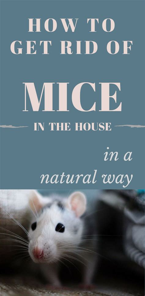 how to get rid of mice in the house in a way