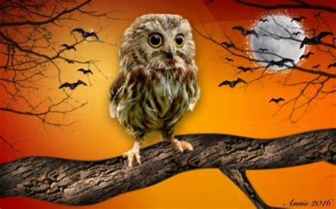halloween owl fantasy abstract background wallpapers